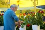 kvetinár na rynku